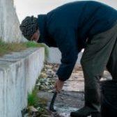Se retiró cardumen de Sabalos en Bajada de Lanchas