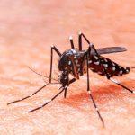 Combatamos juntos el dengue